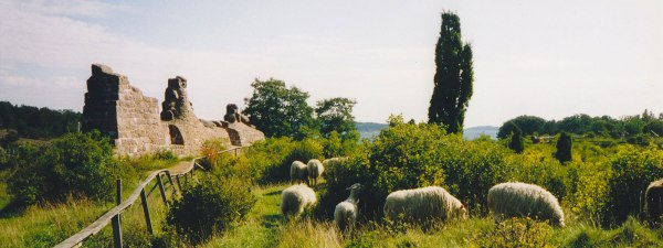 Bomarsund fortress ruins, Åland. Sheep, white.