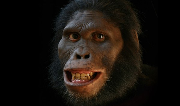 She might look happy but life wasn't easy for the poor australopithecines.